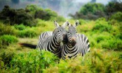 destinations safari